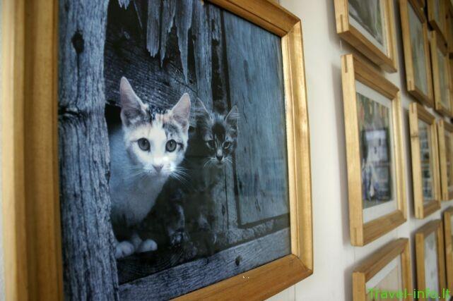Katinų muziejus
